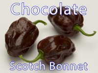 Chocolate Scotch Bonnet Friss Chili